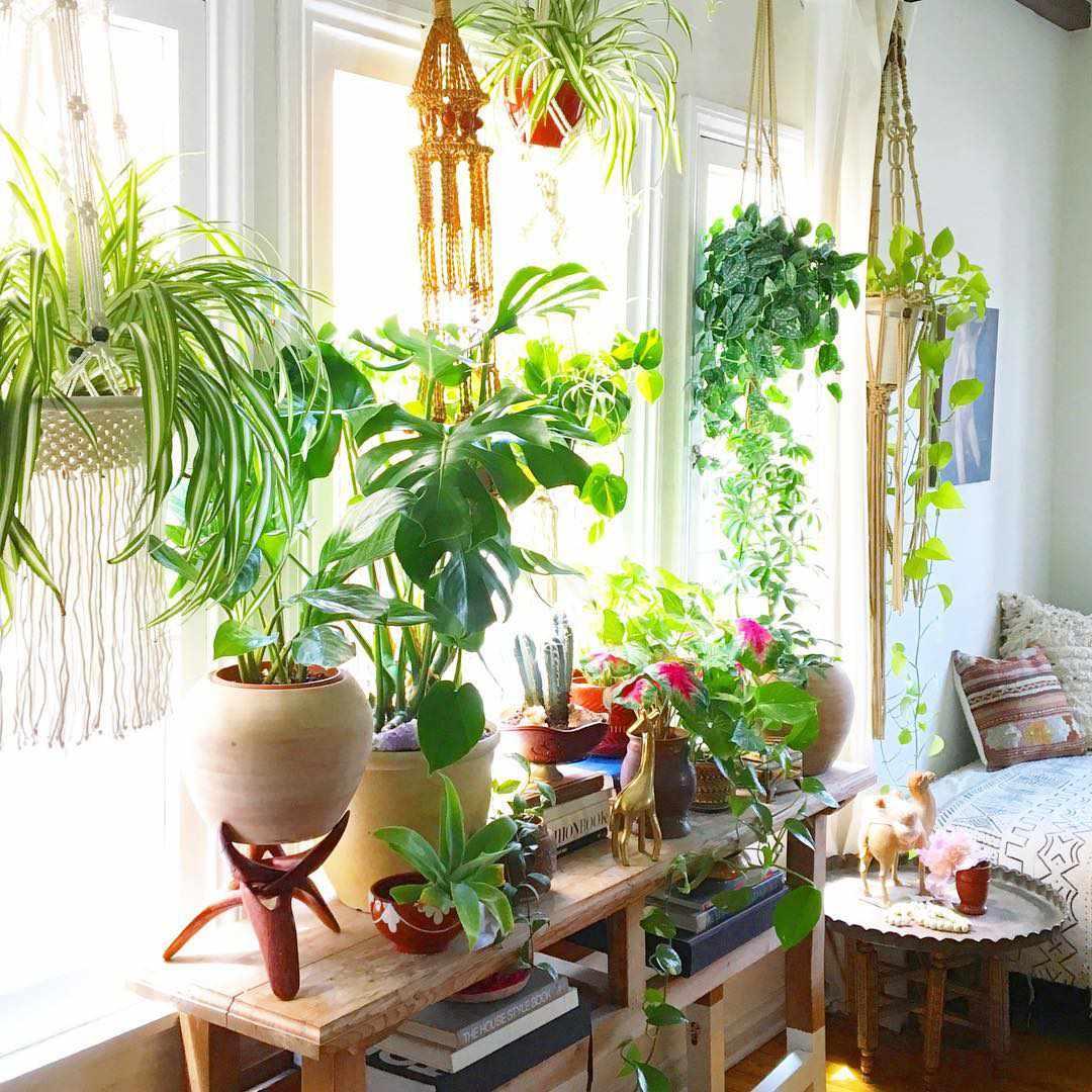 Trang trí phòng trọ bằng các chậu cây đặt cạnh cửa sổ vừa đẹp vừa giúp cây đón ánh mặt trời