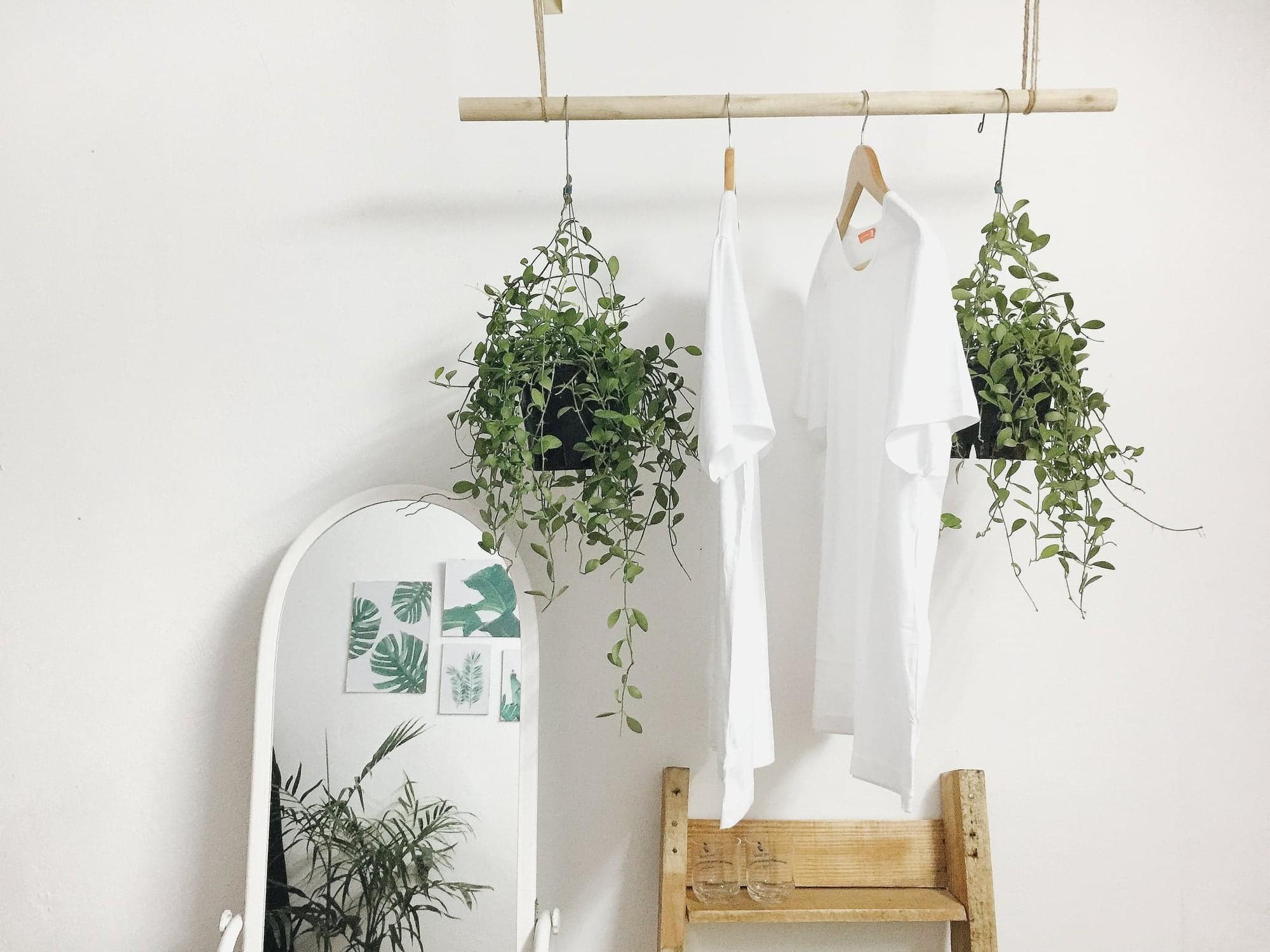 Sử dụng sào phơi đồ làm móc treo chậu cây là cách trang trí phòng trọ độc đáo